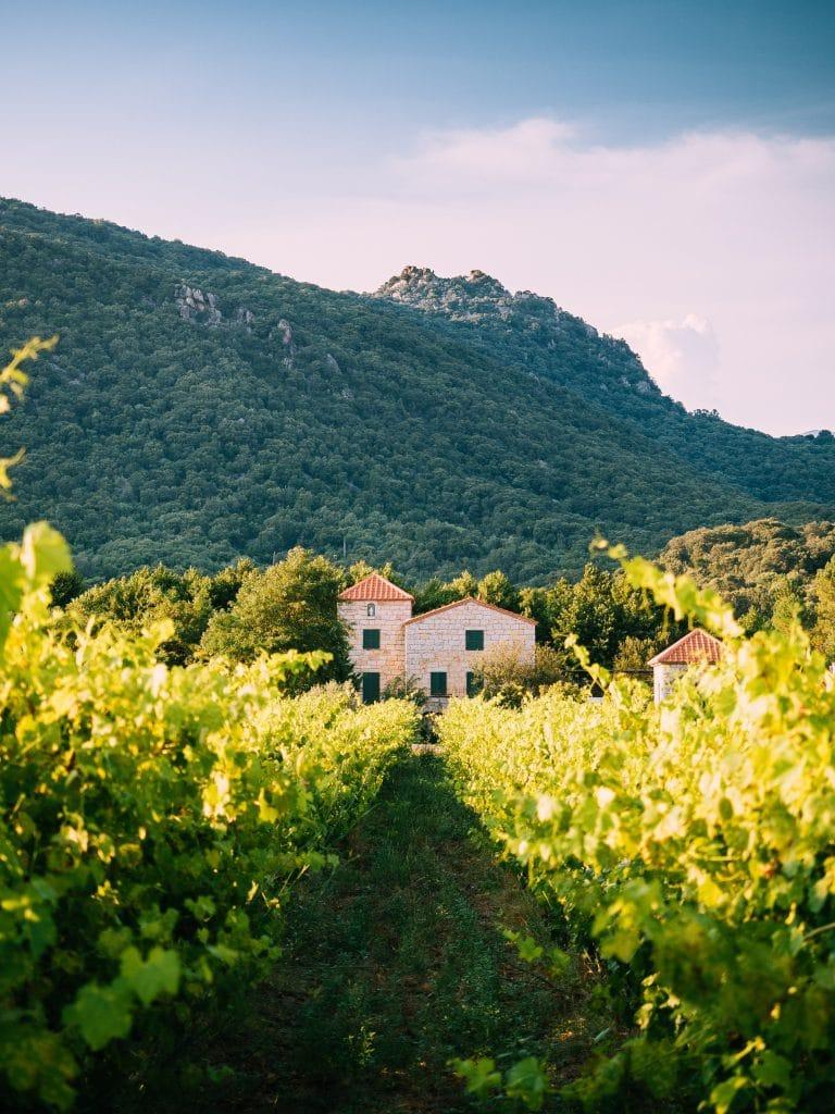Une maison cachée dans les vignobles en Provence