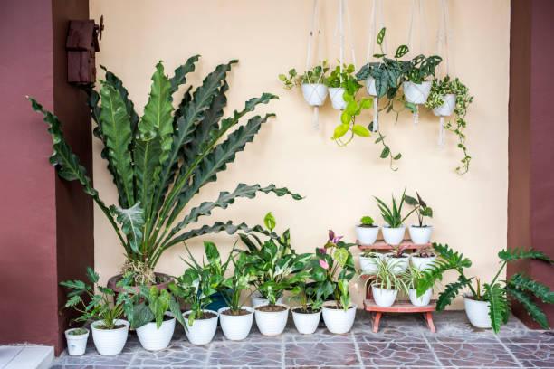 Pots de plantes vertes par terre sur une terrasse et posée sur un vieil escabeau