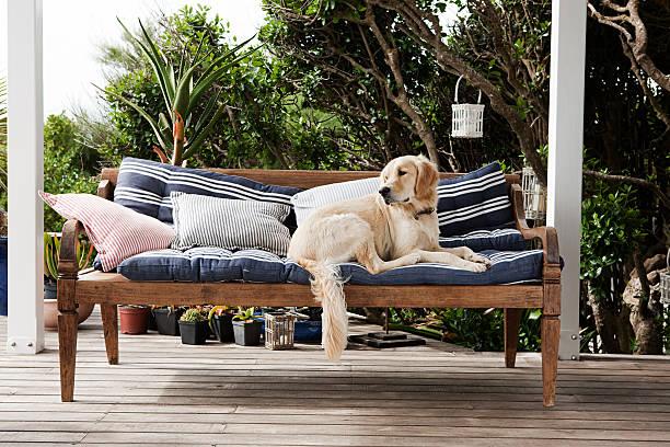 Labrador allongé sur un canapé avec coussin sur une terrasse